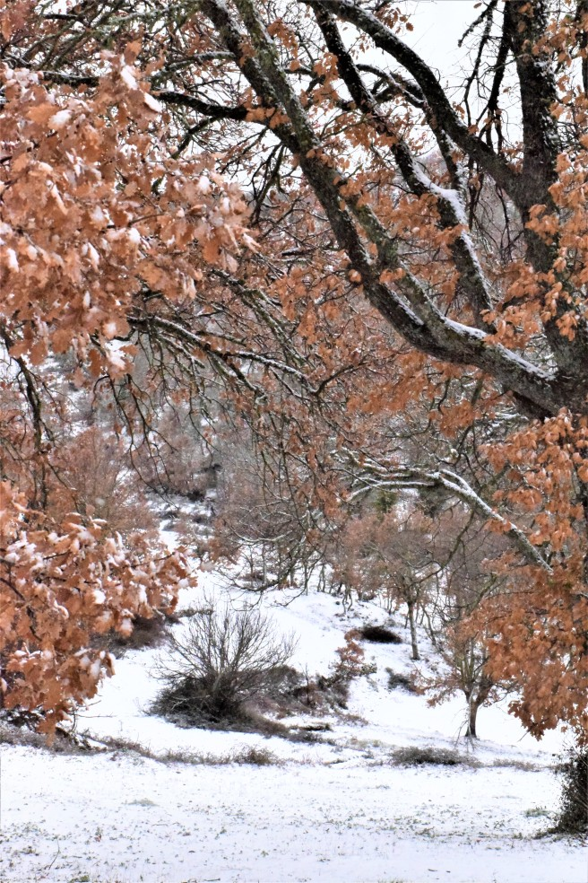 snieg 2.jpg